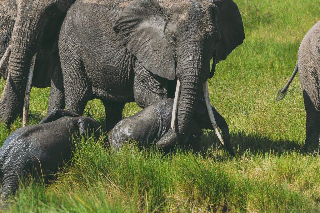 Serengeti National Park 1